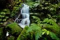Stream through Moss covered rocks