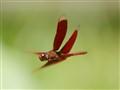 A Airplane,A Bird,A Drangonfly