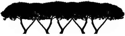 5Trees