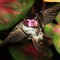 Hummingbird 2011_07_13_02_ps