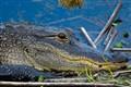 Viera Wetlands Florida