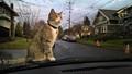 Car owner cat