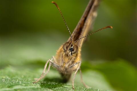 bugs_5