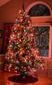 Christmas tree, December '13