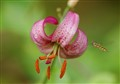 _nectar