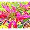 Fleur Poinsettia polarisées a