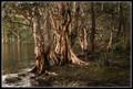 Swampy shore