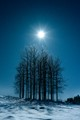 Aspen grove and the moon