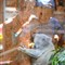 Smile to Koala