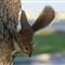 squirrel-tcj