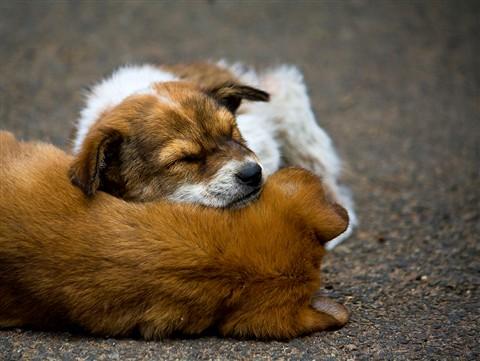 Doggie Pillow 2