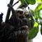 sloths_2011-11