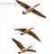 -13_March_river birds_512