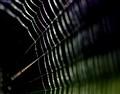 spiderweb-lines