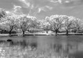 Killie Pond IR
