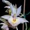 Orchids15_1024_10_eds