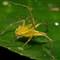 Spider5 web