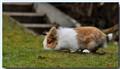 Fluffy rabbit gone walk about