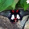 Butterfly 01: OLYMPUS DIGITAL CAMERA