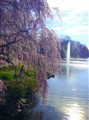 Weeping Cherry & Fountain