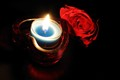 Candle-lit Rose