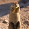 lone-squirrel