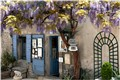 """Wisteria"" is also the name of a small shop in St. Remy - France"