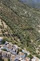 olive trees & village