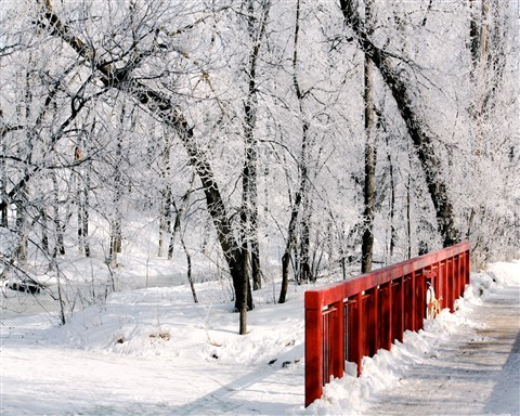 Snow on a River Bridge