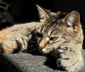 My cat, Oly M. Puss, stretched out on the floor in the sun taking it very easy.