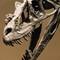 2-NHMU Stokesosaurus