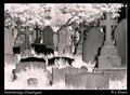 Holmbridge churchyard