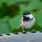 Birds2018-48sm: OLYMPUS DIGITAL CAMERA