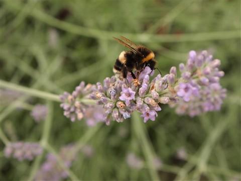 P7220429-bee