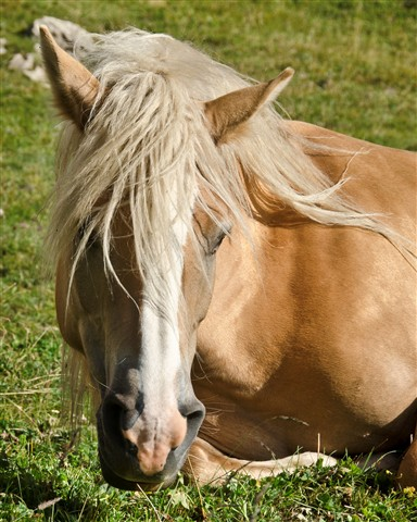 Horse Portrait-1