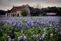 TX Bluebonnets in the Spring