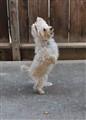 Dancing Bailey