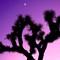 Joshua Tree at Dusk: