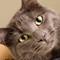 Shadow_20180626_ARL Cat_002-66