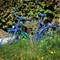 The-blue-bike