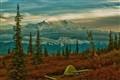 Wonderlake Campground Denali