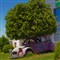 Car with tree