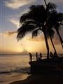 Waikiki Palm Tree