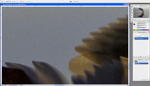 gull sharp Nik TIFF 300pc detail 2