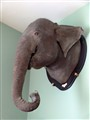 Elephant on the wall