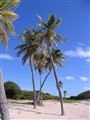 2012 cruise palms