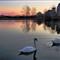 c Humber Park West Swans