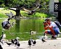 The birds of Regents Park