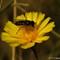 flower bee S0407452 ed 900x600