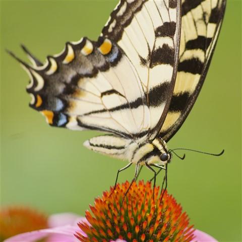 Butterfly_20130720